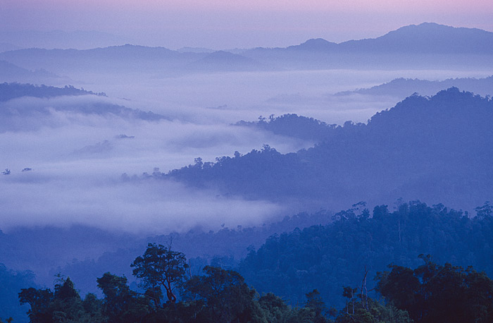 Verdunstung über dem Monsun-Regenwald in Malaysia/Thailand. © Edward Parker