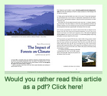 Regenwald-PDF